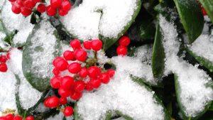 kerstplaatje bij de tips voor de feestdagen